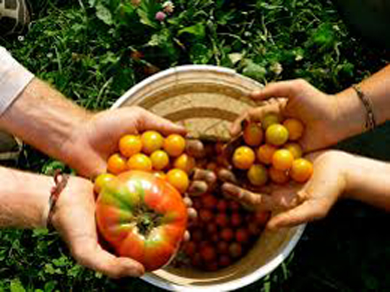 Organic agriculture opportunities in Nepal
