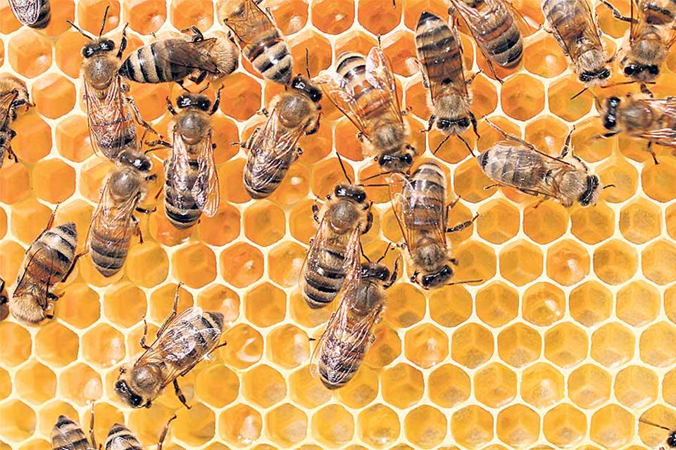 High pesticide use pushing beekeeping toward extinction