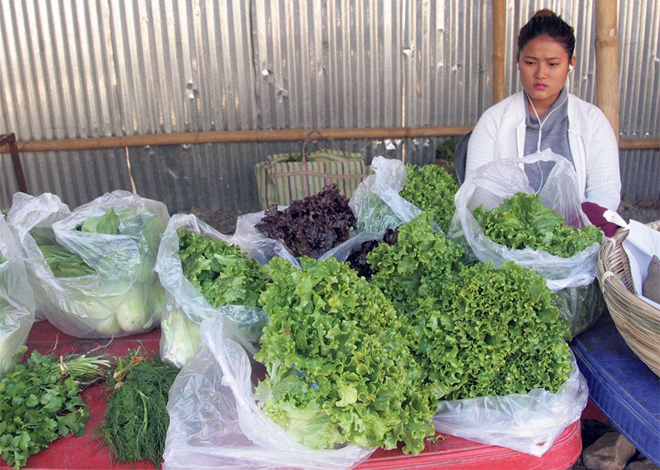 Organic New Year in Dharan