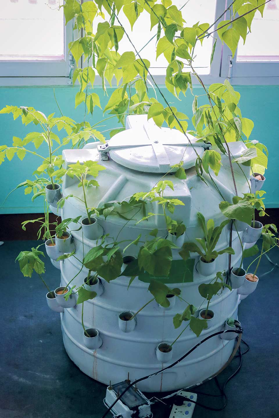 Urban rooftop farms as new city culture