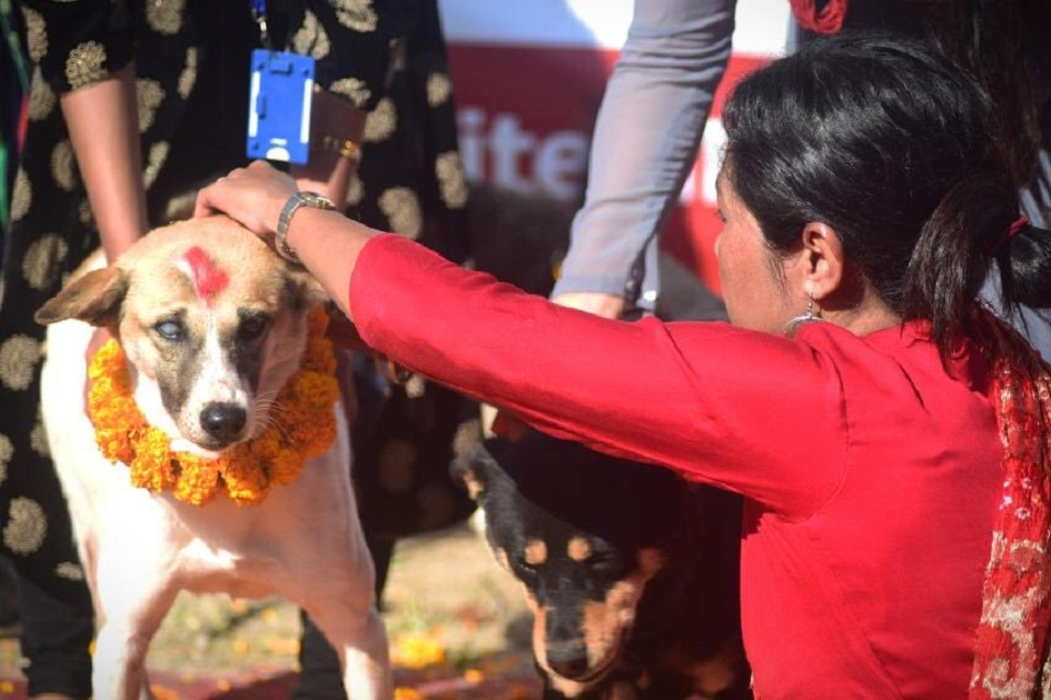 Kukur Tihar, the festival of dogs, being celebrated (with photos)