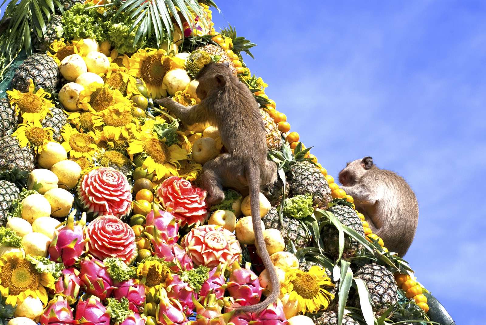 Monkey buffet in Thailand