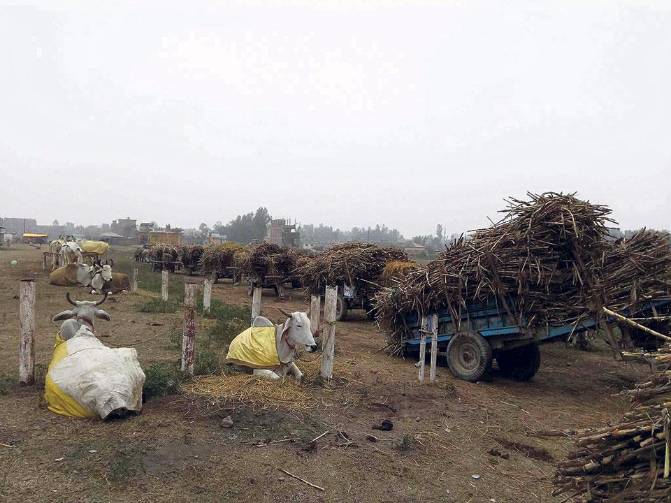 Shree Ram Sugar Mills owes farmers Rs 400m