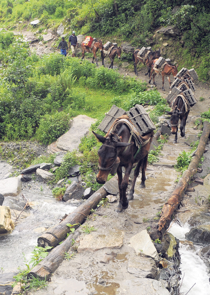 Tourism in Everest thrives on animal abuse