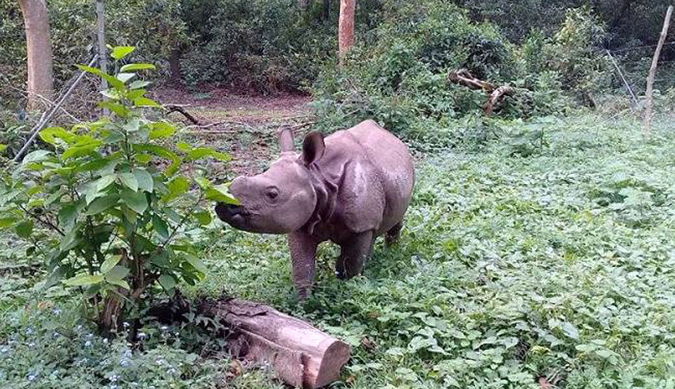All four rhinos to be gifted to China held