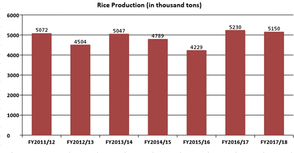 Paddy production projected to drop to 5.15 million tons