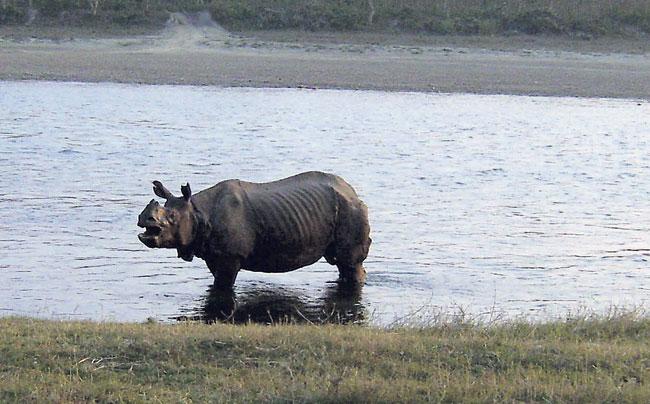 Rhino found dead