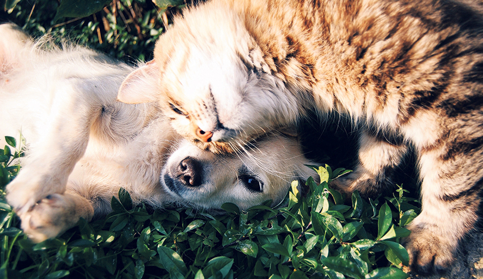 Healthy and happy pets