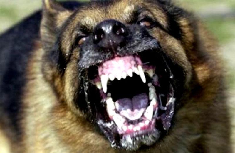 7 injured after rabid dog attacks them