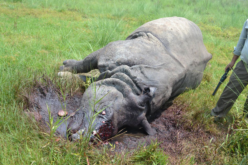 22 rhinos die in Chitwan National Park in past nine months