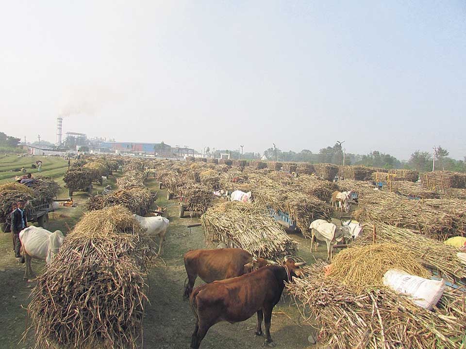 Sugarcane farmers in distress as mill fails to pay for three years