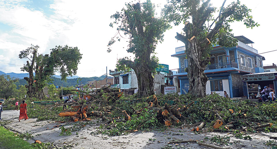 Interim order to stop chopping trees