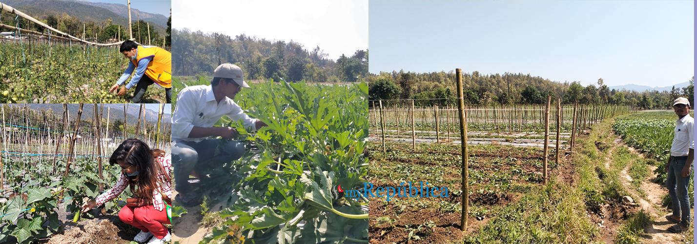 Lockdown creating opportunity for vegetable farmers in Karnali