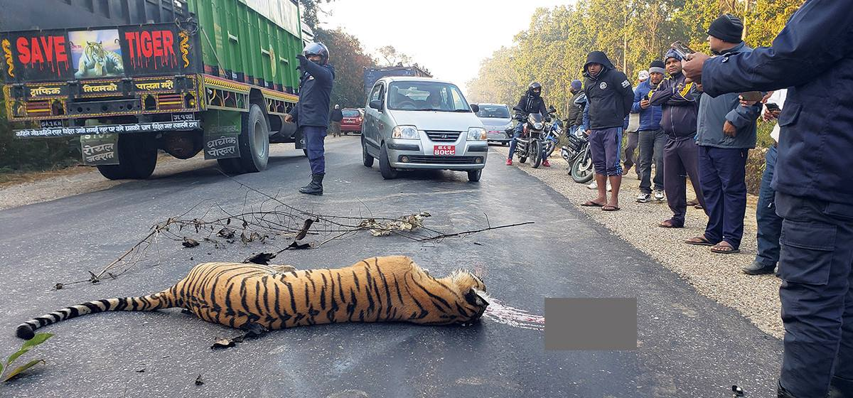 Speeding vehicles kill 358 wild animals in Banke National Park