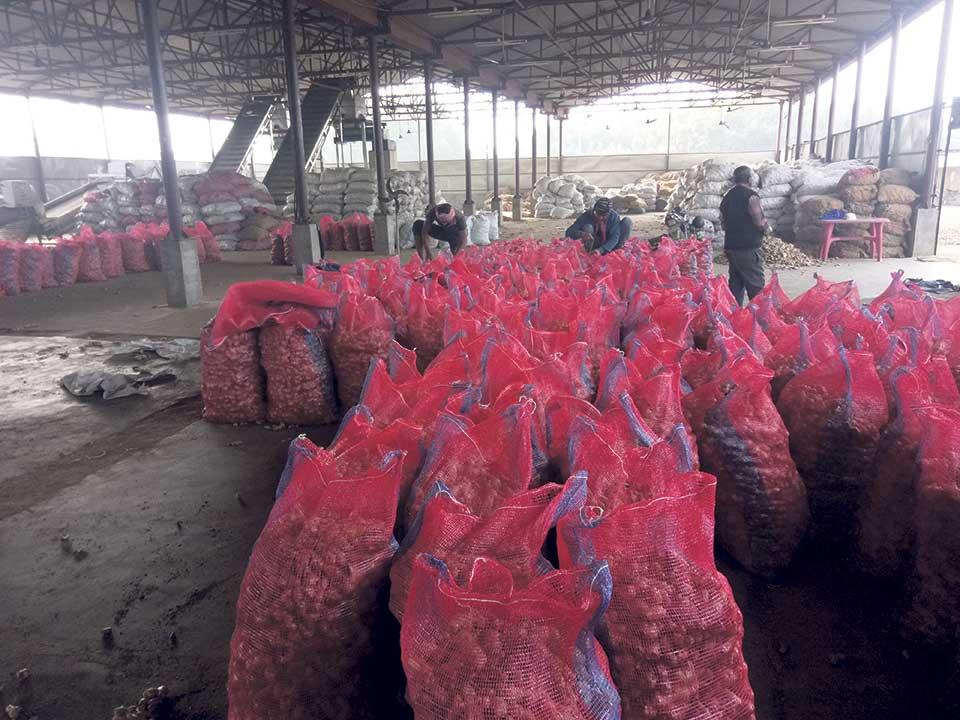 Nepali ginger finds alternative market in Bangladesh