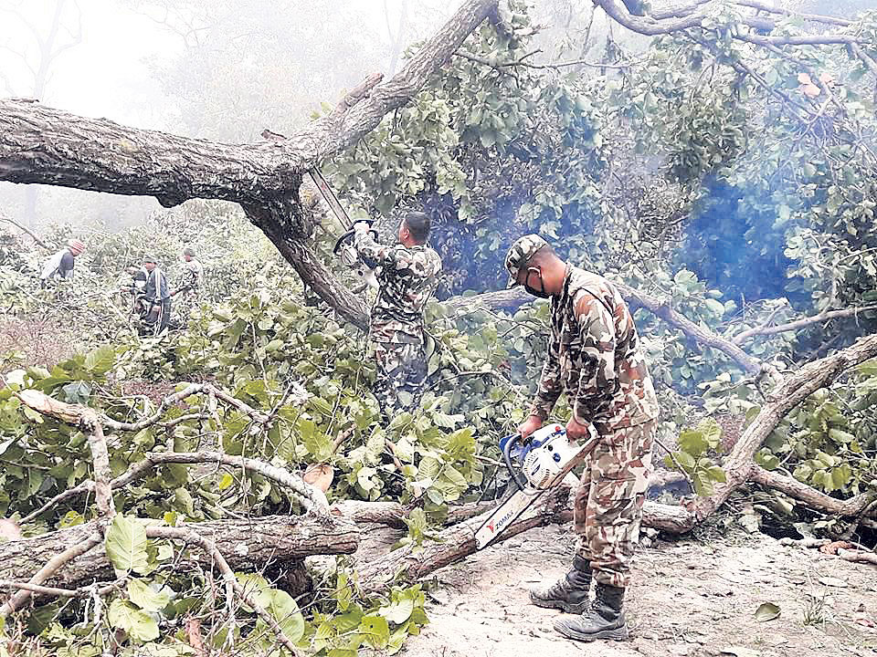 Army begins removing trees from the right-of-way