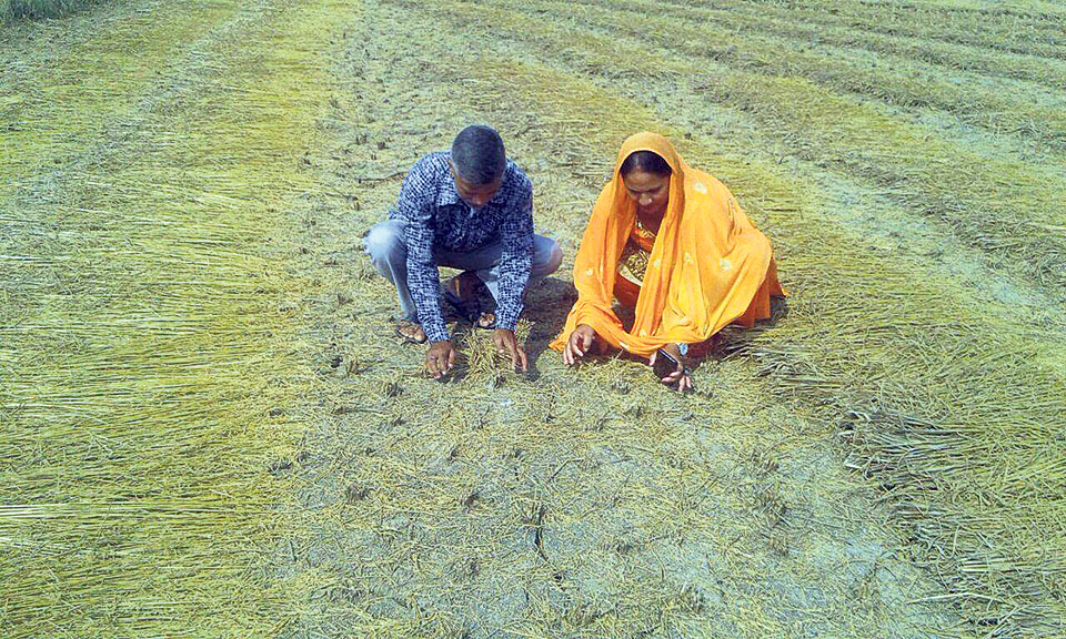 Armyworms damage crops planted in 17 hectares of land