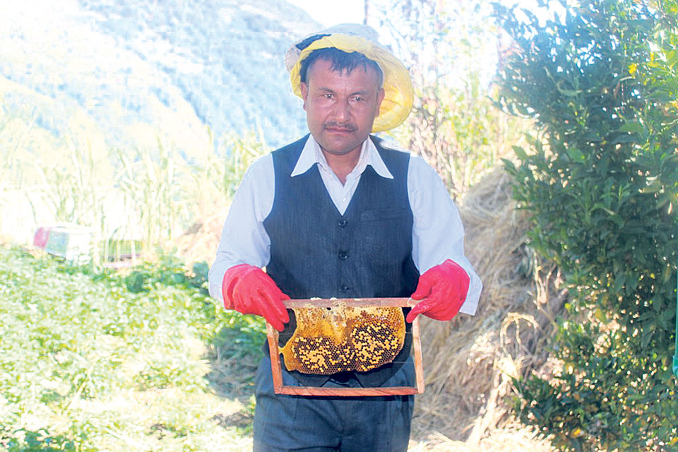 Beekeeping works wonders for Myagdi farmer