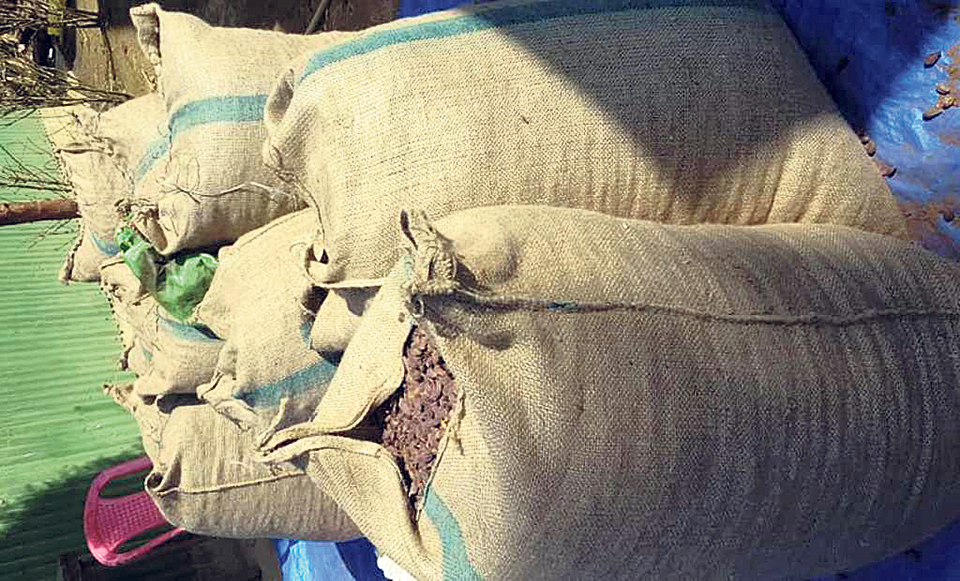 Low big cardamom prices worry farmers