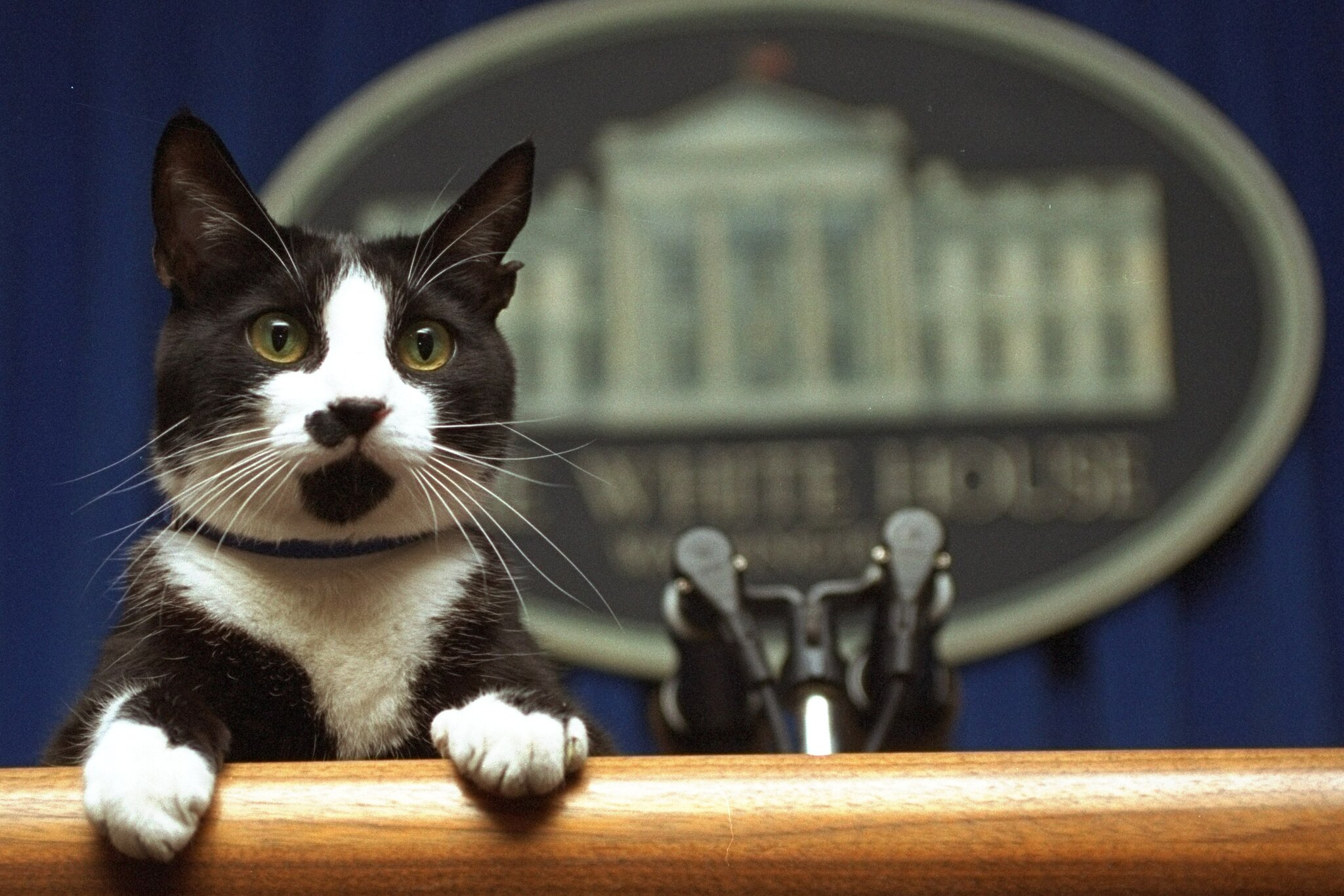 Once again, a cat is set to join the ranks of presidential pets