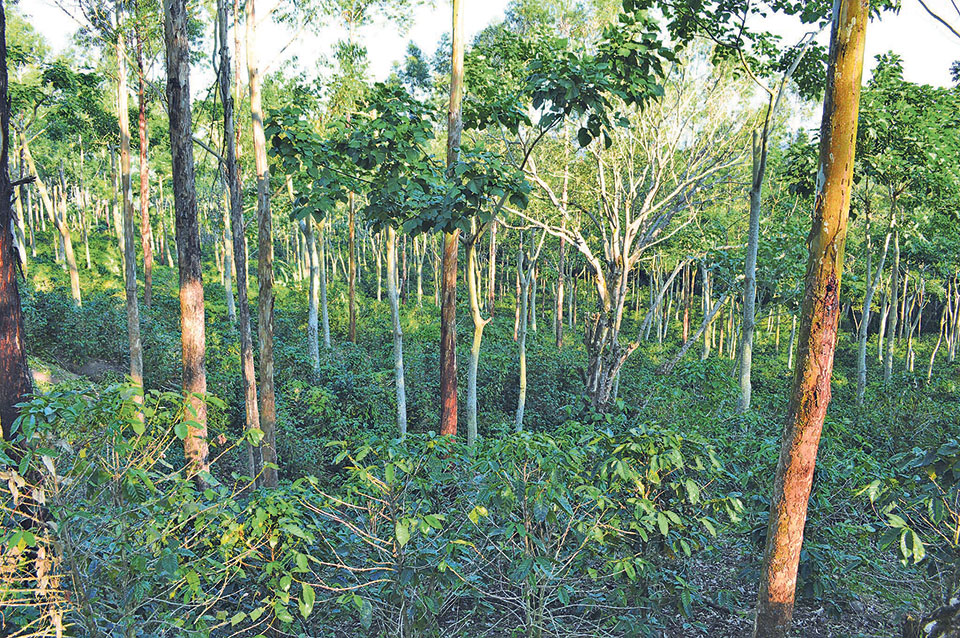 Agroforestry in climate change mitigation