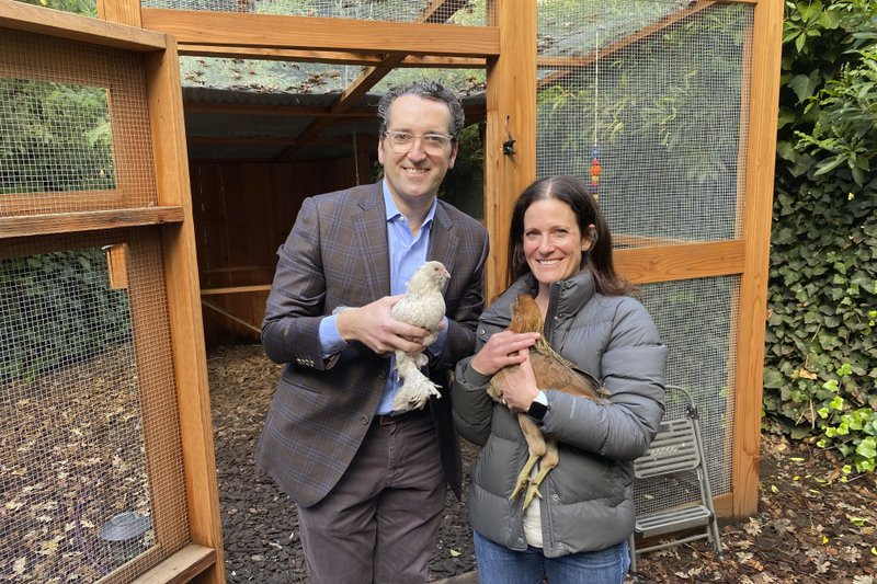 COVID cluckers: Pandemic feeds demand for backyard chickens