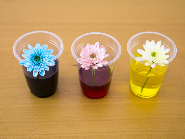 Hand-dyed flowers