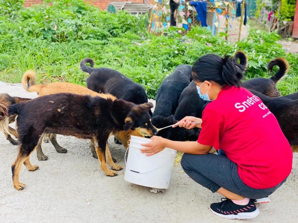 Sneha's Care feedstreet animals amidst lockdown