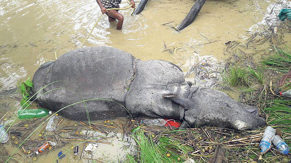 One-horned rhino and six deer found dead