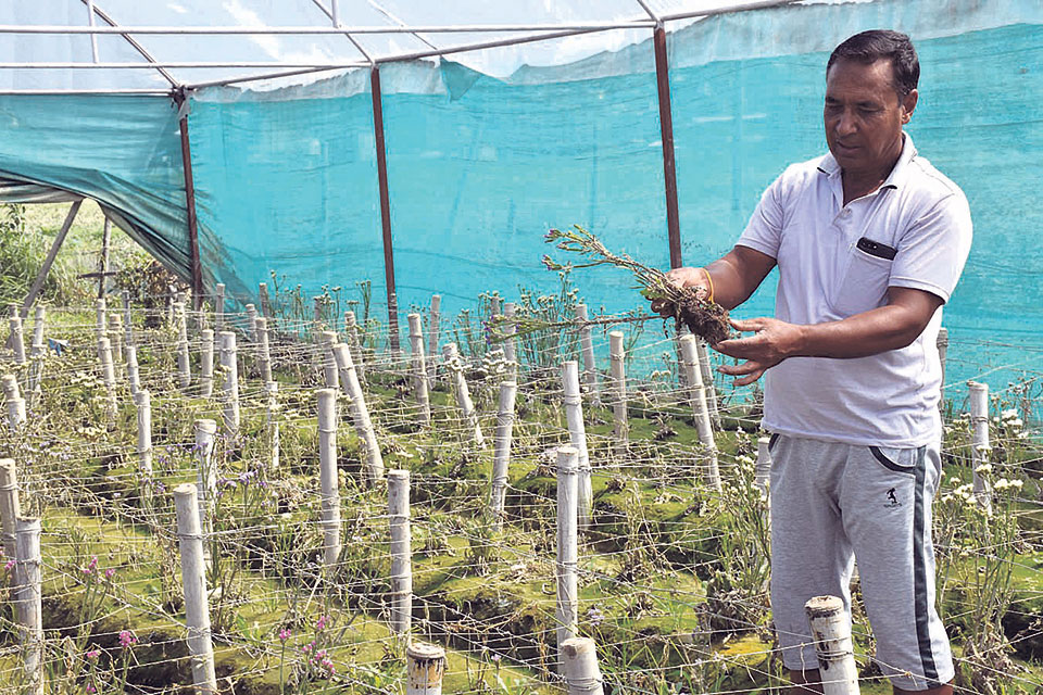 Flood wreaks havoc on major flower farm of Kavre