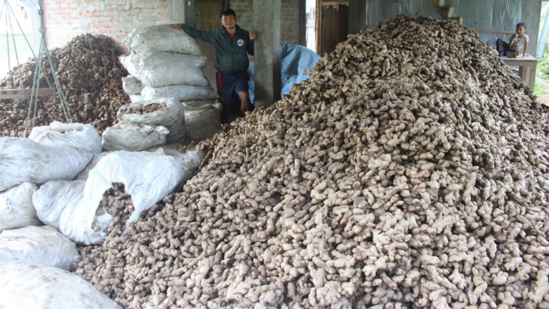 India lifts ban on Nepali ginger