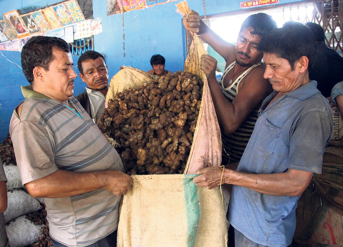 Construction of ginger and turmeric processing plant does not seem viable