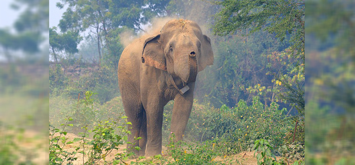 One killed in elephant attack