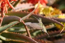 Hummingbird sanctuary provides respite from stresses of Bogota city life