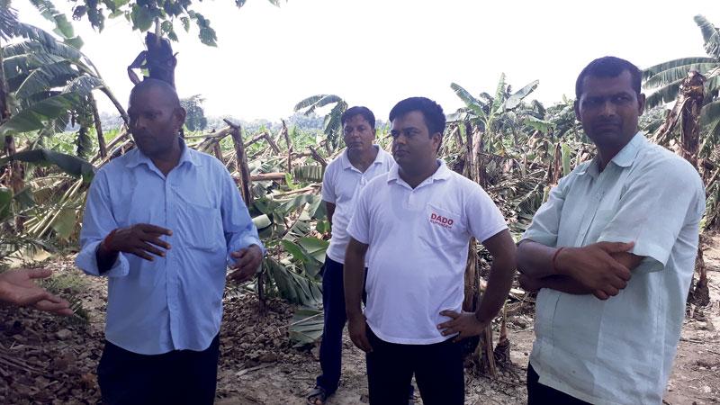 Storm, rainfall damage banana crop worth Rs 18 million in Rupandehi