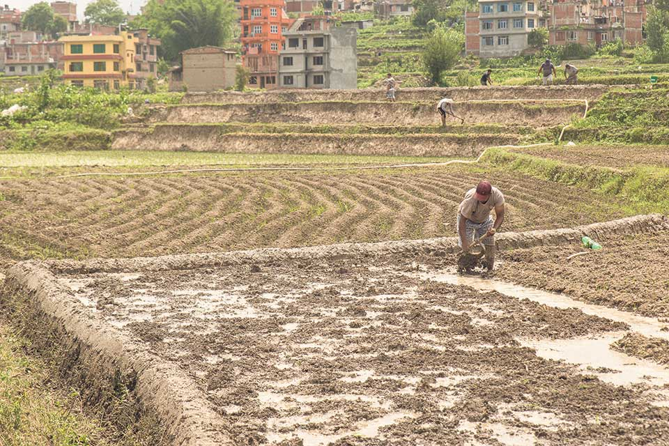 Land Reform: Lacking Holistic Approach
