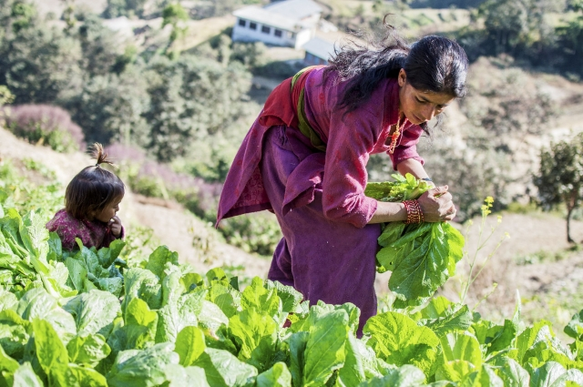 GRAPE to foster climate resilience and green economic growth in Nepal