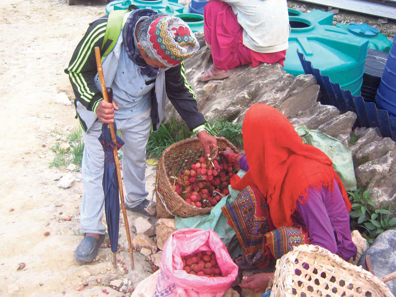 Litchis start arriving in Khotang markets