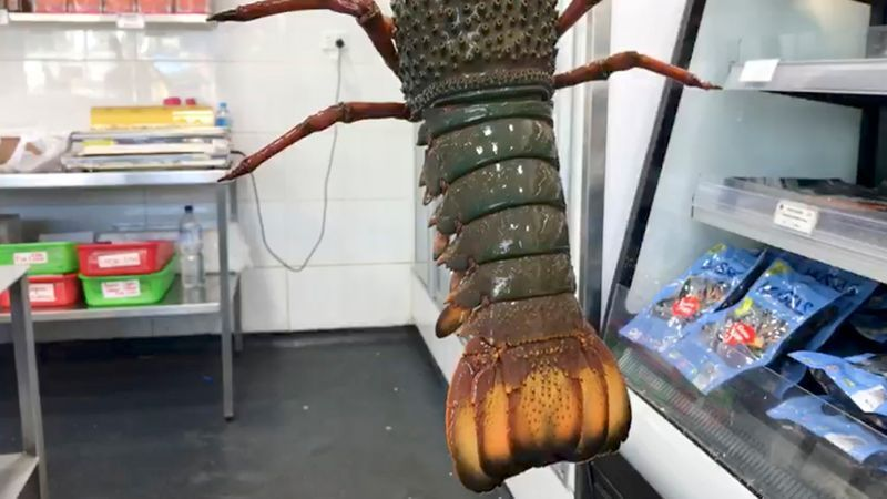 Lobster shell patterns make concrete stronger: Australian researcher