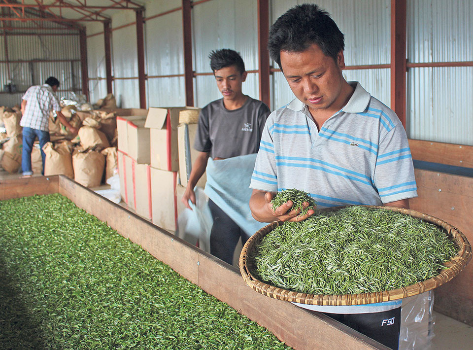 High demand for Nepali tea in Europe
