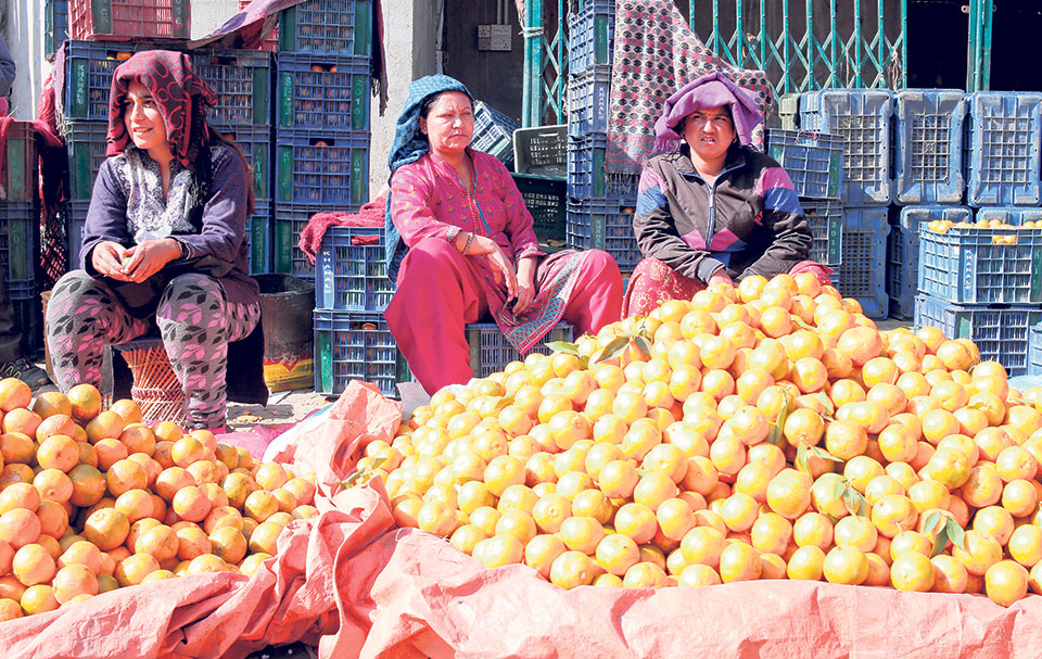 Supply of domestic oranges to Kathmandu sees dramatic fall