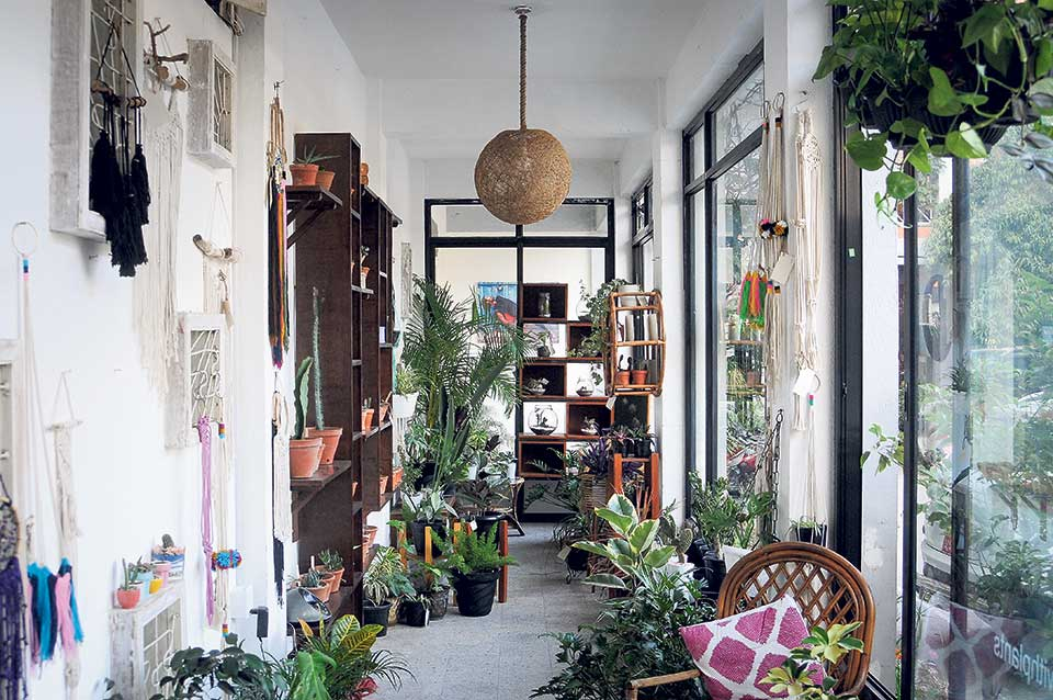For the love of plants: A little patch of green in the middle of a crowded place