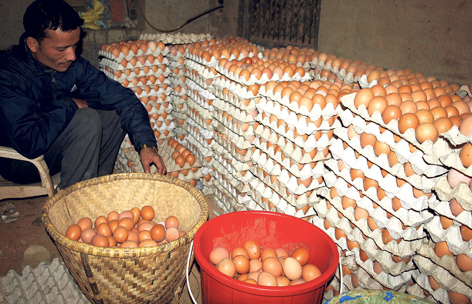 Poultry farmers shift to other professions as shortage of chicks lingers