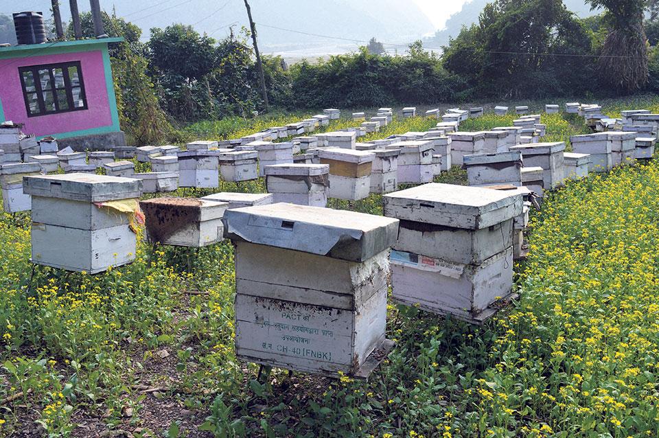 Beekeeping provides new livelihood to double amputee