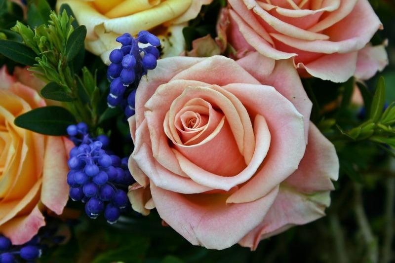 Plastic Rose Day