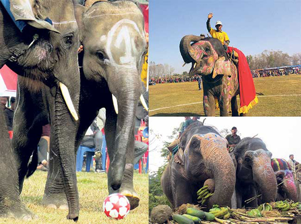 Animal rights activists urge Nepal to end elephant abuse