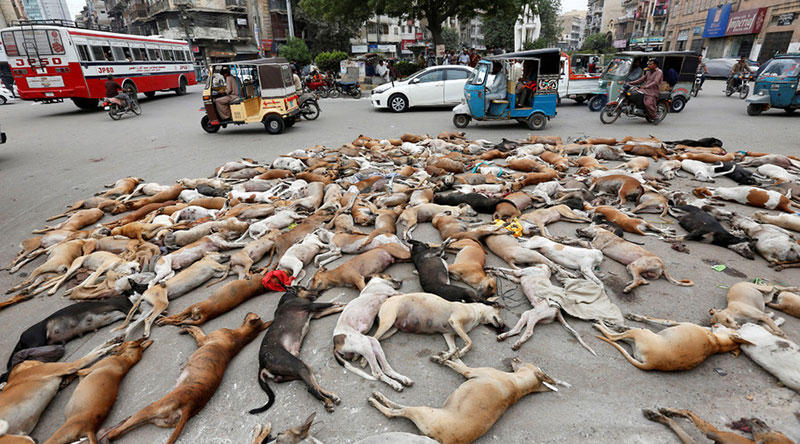 Hundreds of stray dogs poisoned in Pakistani city of Karachi