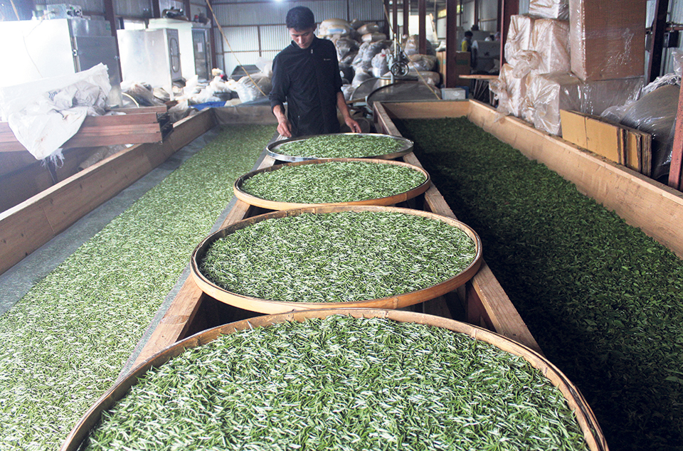Green tea buds traded at Rs 1,500 a kilo