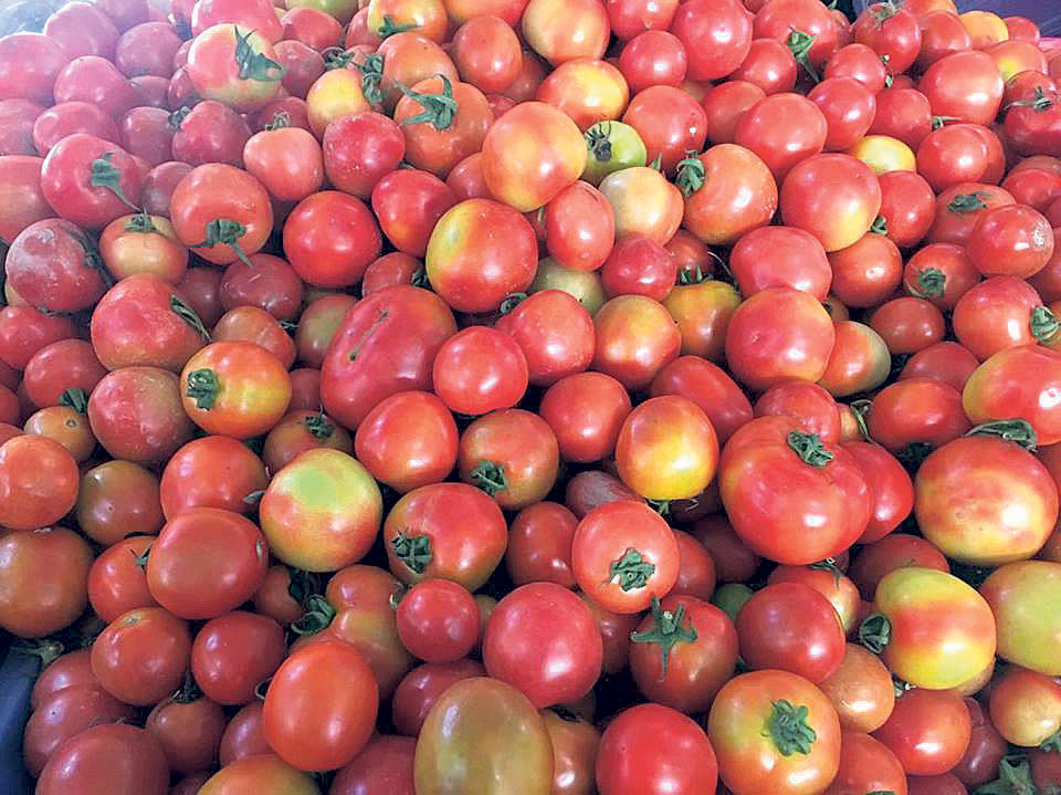 Tomato price hits the roof
