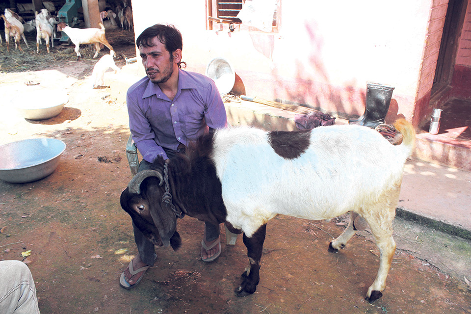 Trained as a computer engineer, now a model goat farmer
